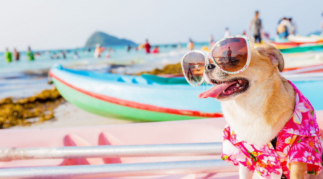 Pet Owner Dilemma: Does my dog need sun protection too?