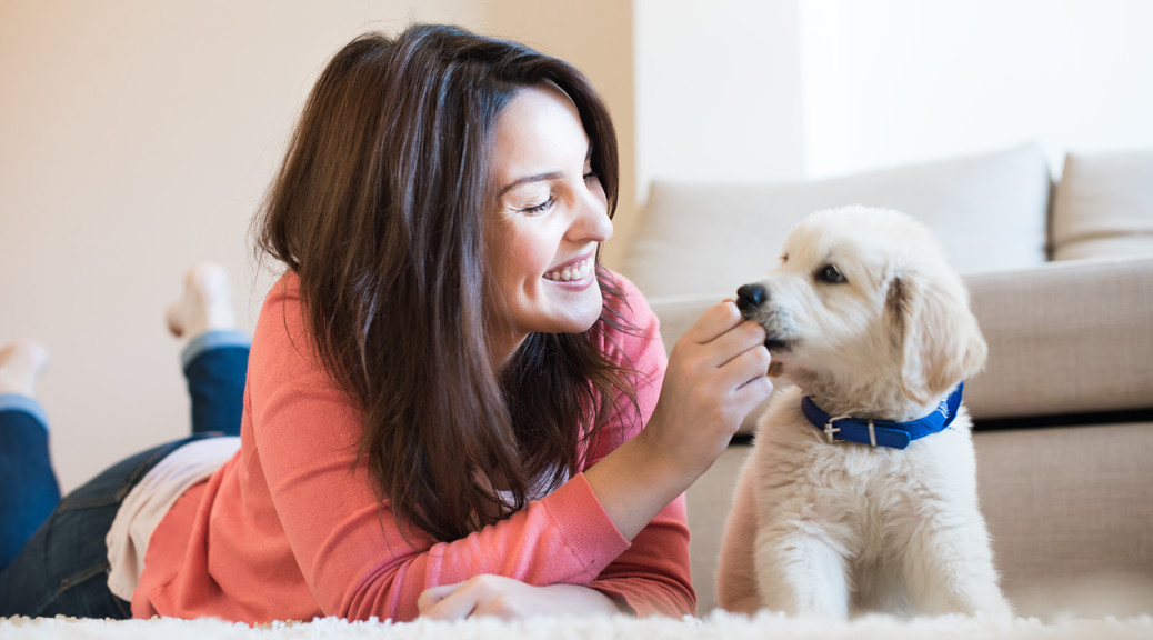 How to choose the perfect pet sitter