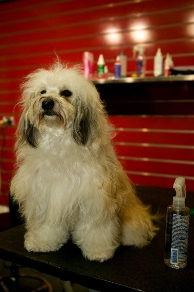 Specialised Quality Dog Grooming - Tails R Wagging